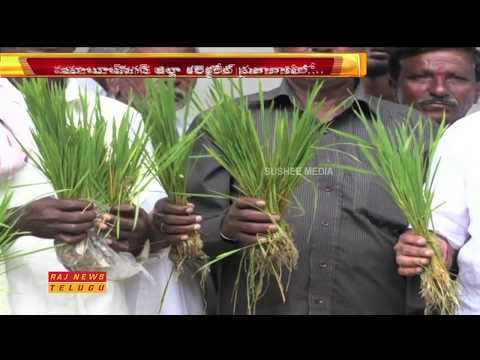 Koil Sagar Farmers Protest at Mahabubnagar Collectorate || Raj News