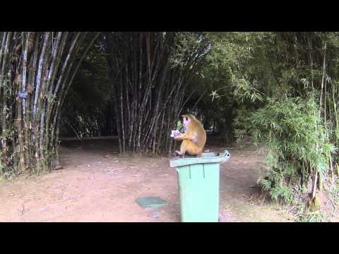 2013-09-05 - Mülltonnentaucher im Botanischen Garten - Kandy, Sri Lanka