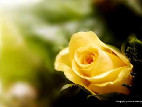 Flora Martirosyan-----lusnyak gisher