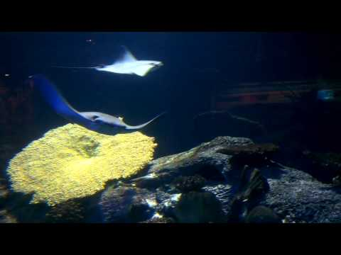 Mandalay Bay Shark Reef Aquarium - Las Vegas