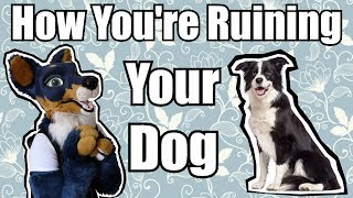 How You're Ruining Your Dog