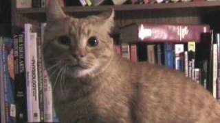 Flashback: Talking Cat Vlog