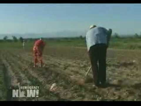 DN! Philip Morris Using Child Labor in Kazak Tobacco Fields