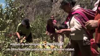 Perú, productos naturales: Plantas medicinales