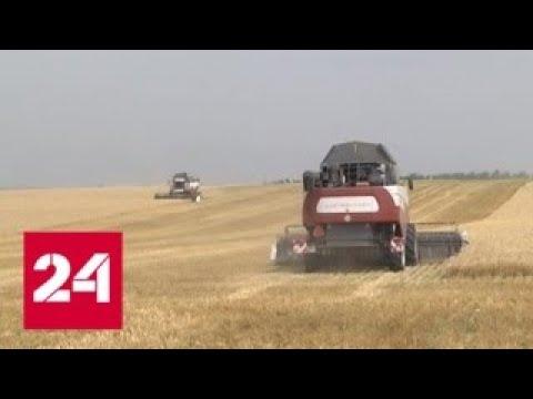 Зерновая интервенция: фермеры США уступают российским на пшеничном поле - Россия 24