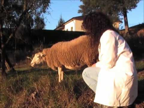 Interview With Dolly, the sheep