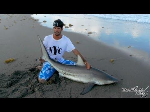 Mullet Run Fishing - Blacktip Shark