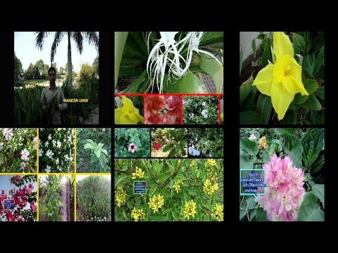 Natural fresh flowers and Plant IHome Gardun  Growing Flower Gardens