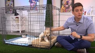 Zak George and the Potty Training Puppy Apartment - How to Potty Train a Puppy