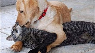 The most funny moments of Animals - Animals are so funny that you can die of laughter  # 75