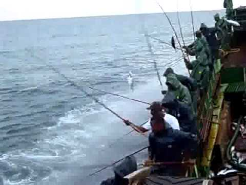 Pole and Line tuna Fishing