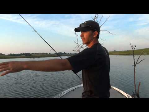 Fishing the Wood with Soft Plastic Worms for Largemouth Bass