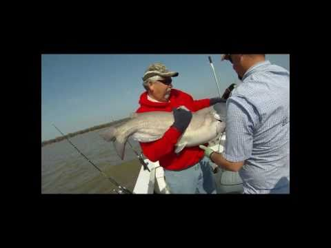 Lake Tawakoni Big Bluecats