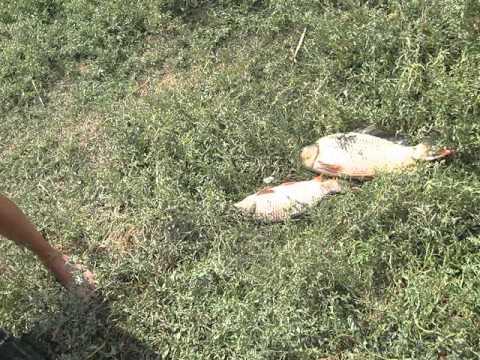 рыбалка в мелитополе видео