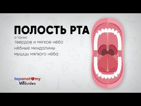 0 - Що робити якщо опухло небо в роті і коли потрібен лікар
