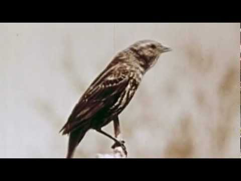 Broken Dog - Sing Little Bird Sing