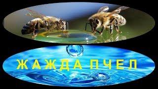 Жажда пчел -  что это