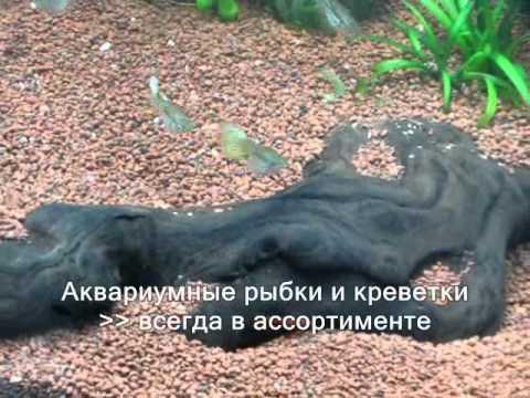 Все беременная рыба не хочет умирать Кемерово: первокурсников Кемеровского