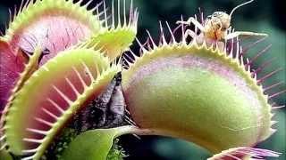Las 5 plantas carnívoras más bellas del mundo