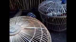 Cara Beternak Ayam di Luar Negeri dan di Indonesia ( BANDINGKAN )