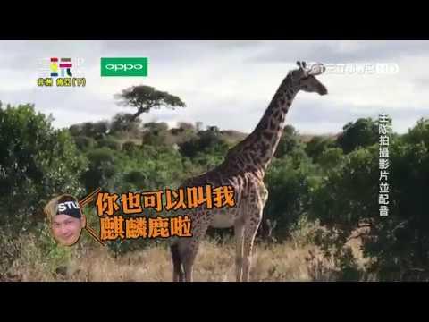 【非洲經典回顧】非洲動物上演鄉土劇?!綜藝玩很大