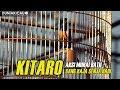 MB KITARO Sang RAJA SENJA HARI Beraksi Di JAYAKARTA CUP 2018