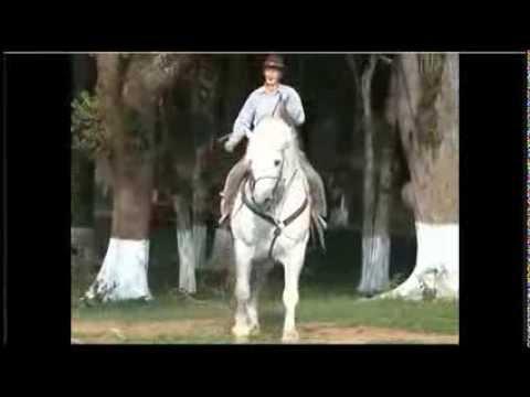 O maior cavalo do Brasil