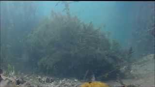 Fish in the Kenosha harbor