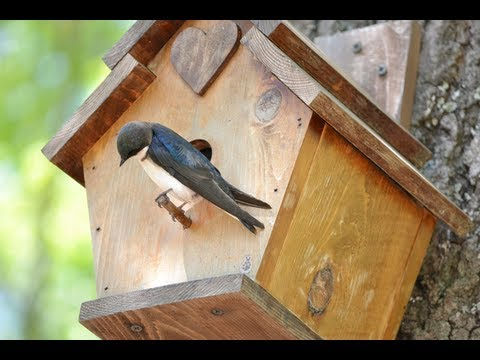 How to make a birdhouse out of wood youtube for How to make homemade bird houses