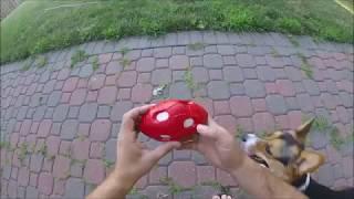 NERF Dog - Football