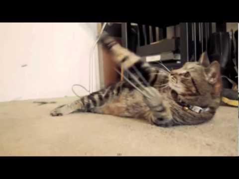 Gato Lobezno, X cats Origin
