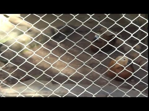 Zoológico de Belo Horizonte/MG