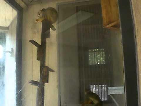 リスザル 動物園