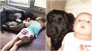 A baby girl and a black dog grew together to be inseparable friends