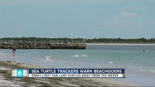 Volunteers need help protecting sea turtle eggs during one of the largest nesting seasons