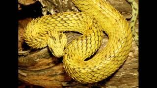 Video clip Những loài rắn đẹp nhất thế giới Kvi