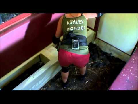 Ashley Roberts Terror Train Bush Tucker Trial on I'm a Celebrity Get Me Out of Here 2012