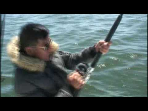 Cau Ca  Stripe Bass 5 (30 pound)