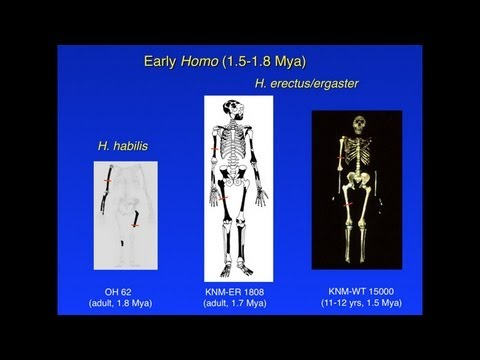 CARTA:Bipedalism and Human Origins--Christopher Ruff: Limb Strength and Locomotion in Early Hominins