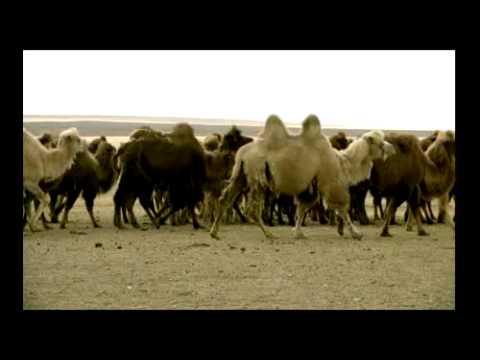Bobo - Namar Oroin Duu.flv video
