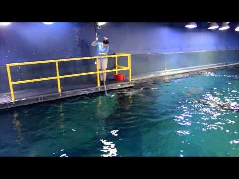 Adventure Aquarium biologists feed sand tiger and sand bar sharks