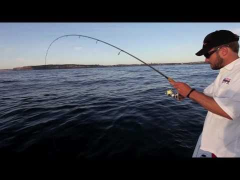 Sydney fishing - light tackle action on kingfish, bonito and amberjack.mov