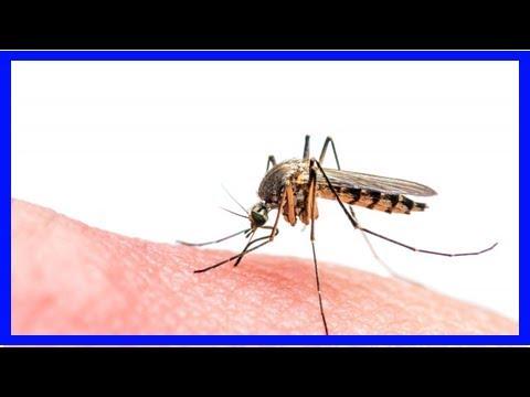Dengue-Fieber-Gefahr: Urlauber am Roten Meer müssen sich vor Mücken schützen