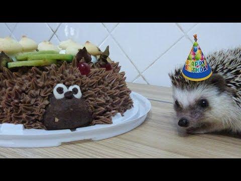 День рождения Чижуни ! Готовим торт !