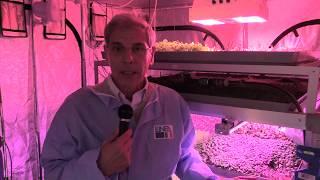 Innovazione: Ecco l'orto ipertecnologico a prova di Marte