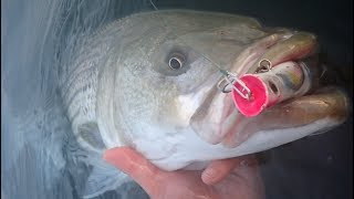BIG Fall Surfcasting Stripers - Topwater!