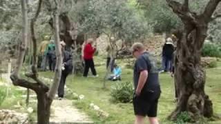 The Garden of Gethsemane, Jerusalem, Israel