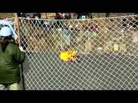 猛獣脱出対策訓練 in 多摩動物公園 (2011.02.22)