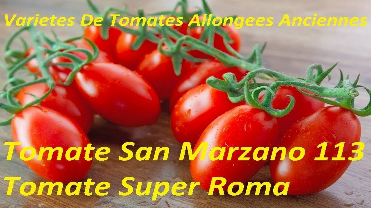 vari t s de tomates allong es anciennes 2 super roma san marzano 113 tomatoes youtube. Black Bedroom Furniture Sets. Home Design Ideas