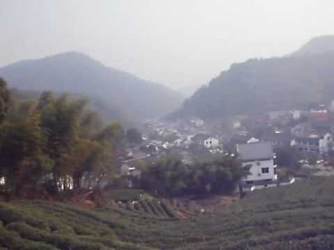 Longjing tea mountains